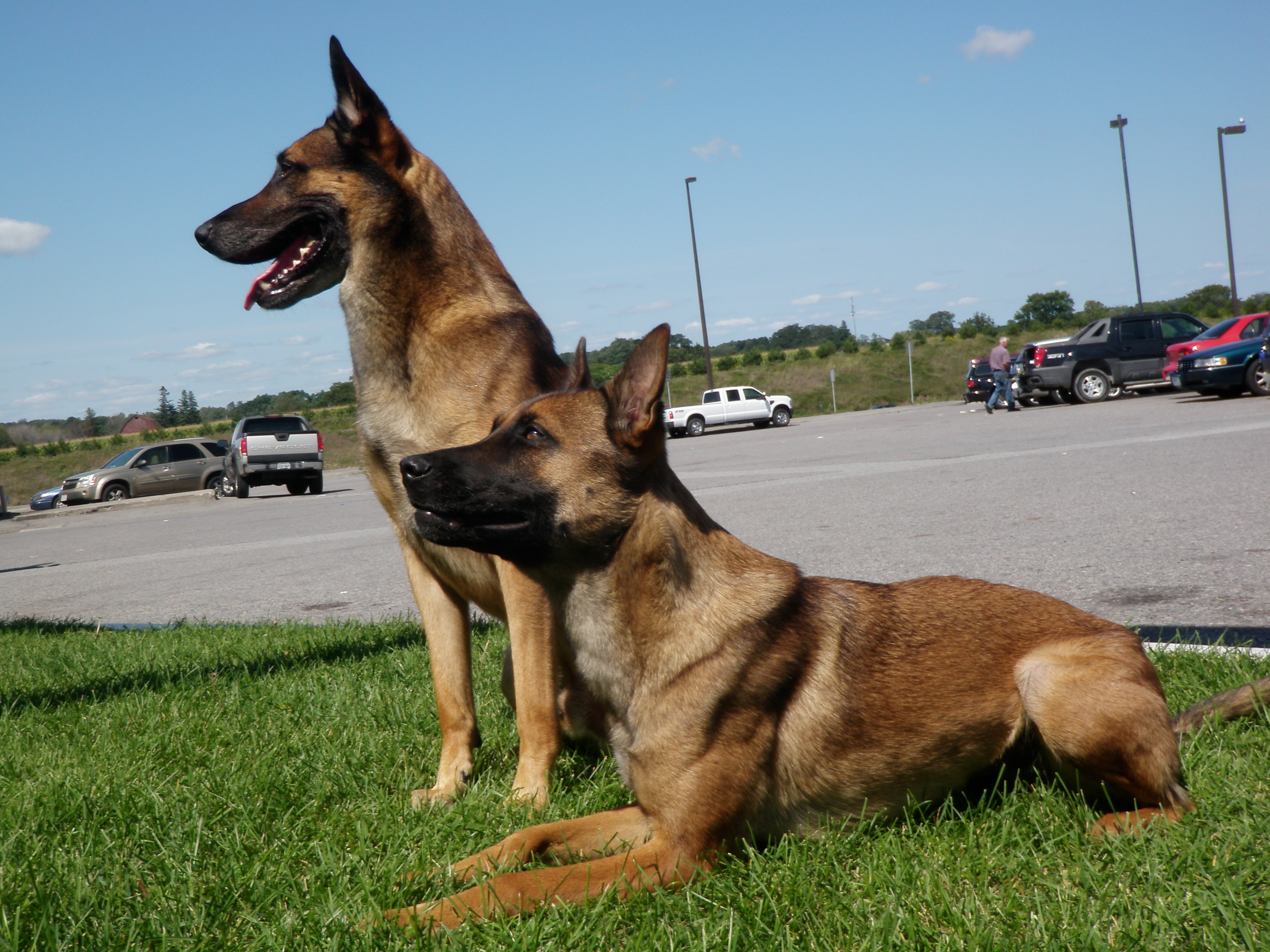 The 3MD K9 Veteran Victory Award Goes to Judge – The NJ Police Hero