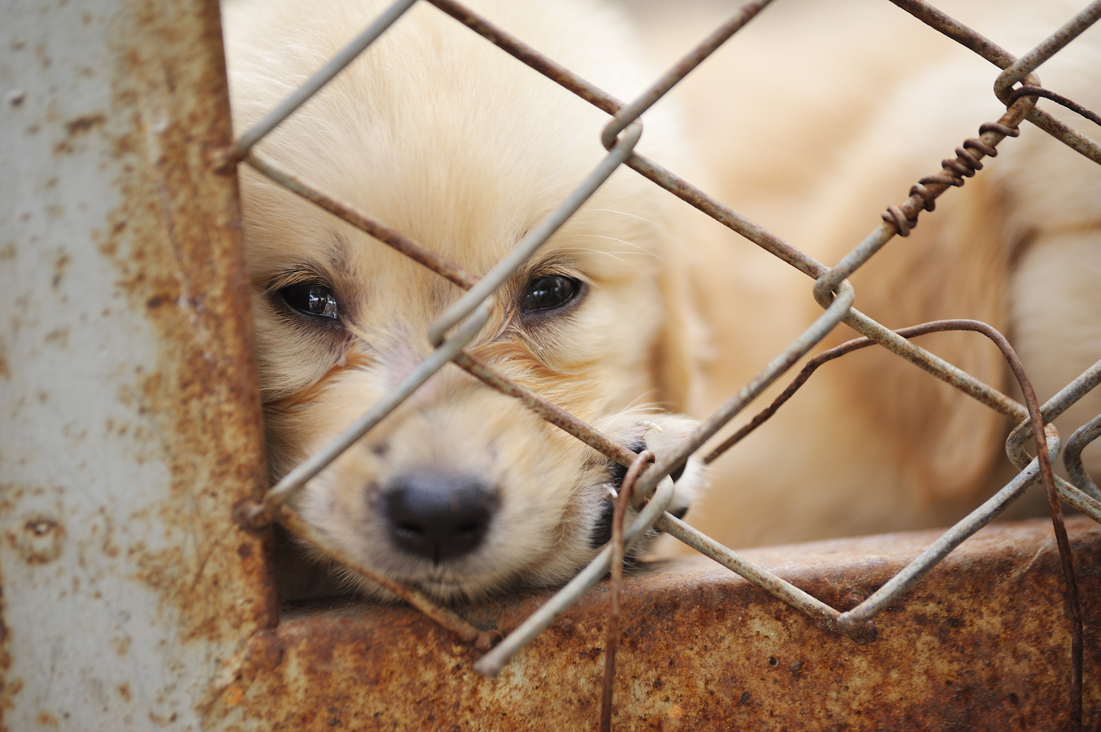 How Reporting Puppy Mills Or Dogfighting Can Earn You $5000