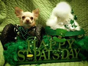 roo-and-penny-celebrate-st-patricks-day-by-wearing-green-e1394801183892