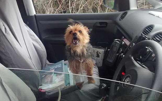 Alfie the Yorkshire Terrier is rescued after flagging down an RSPCA van himself, 100 miles away from home.
