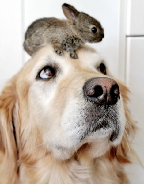 16 Dogs Who Love Bunnies And It Will Totally Melt Your Heart