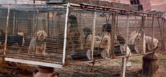 Why Puppy Mills Exist And What You Can Do About It