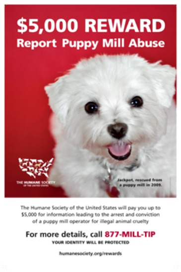 Why Puppy Mills Exist, And What You Can Do About It