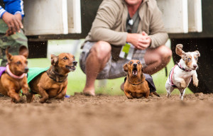 2013 Wiener Dog Wars Race 4