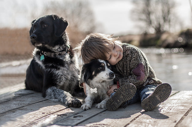 Polish artist takes heartwarming photos of her son and dogs