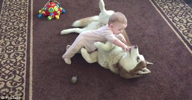Boo the Husky playing with baby Stella