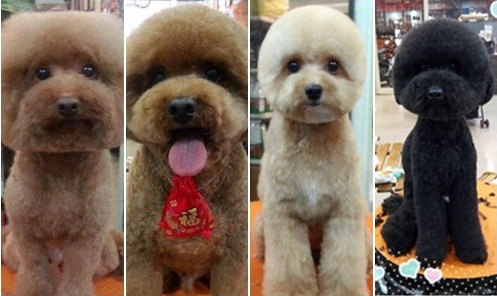 Dog owners in Taiwan are cutting their dogs fur to be perfectly square or round in latest trend