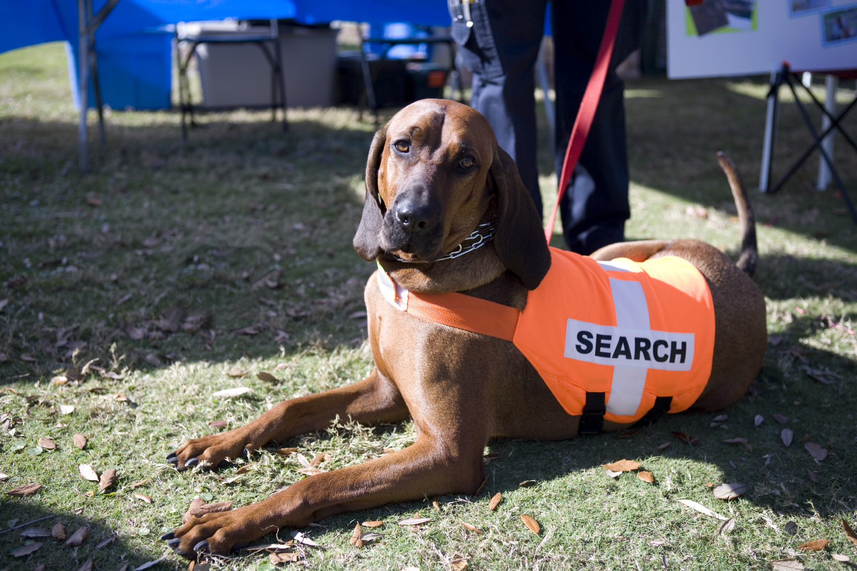 Shelter Dogs Get A New Lease On Life As Disaster Rescue Dogs
