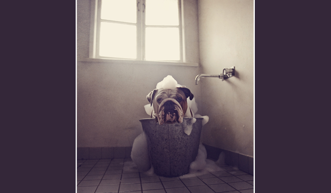 Photographer captures dogs before and after bathtime