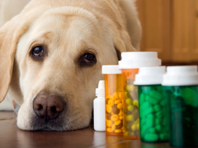 pet-meds-for dogs