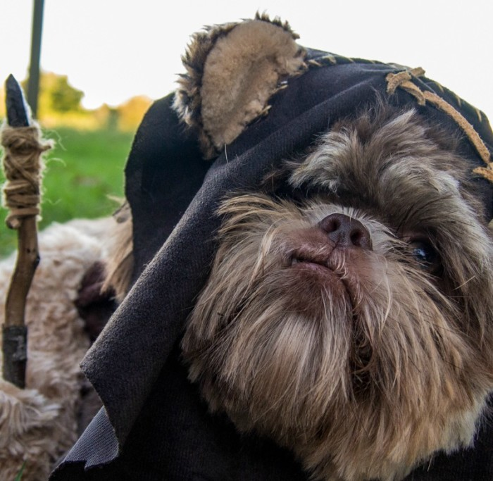 Can You Guess Which Dog Star Wars Ewoks Were Based Off Of