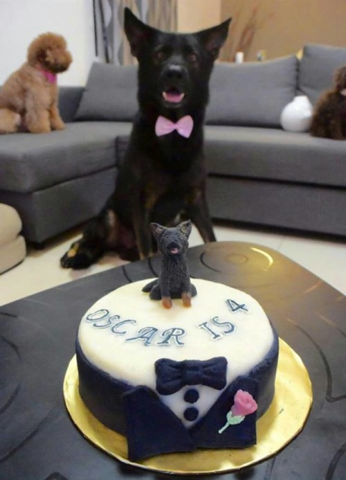 10 Amazing Birthday Cakes People Had Made For Their Dogs