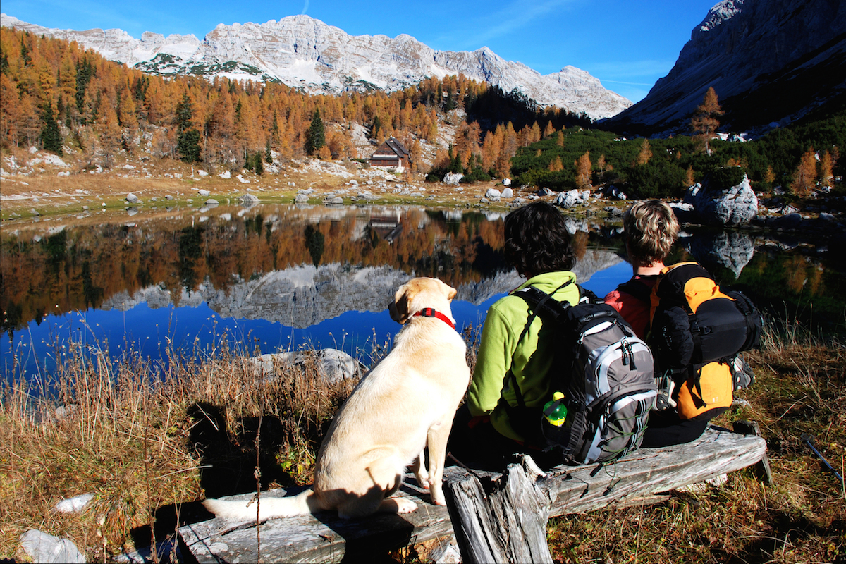 9 Items To Bring When Camping With Your Dog