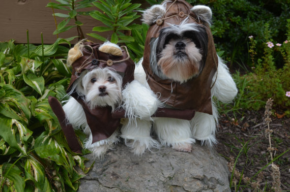 Can You Guess Which Dog Star Wars Ewoks Were Based Off Of? | 3 ...