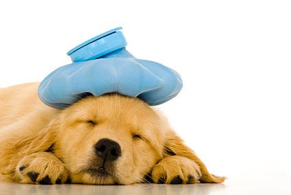 What To Do If Your Dog Has Kennel Cough   3MillionDogs