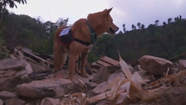 Dog in Nepal rescue team