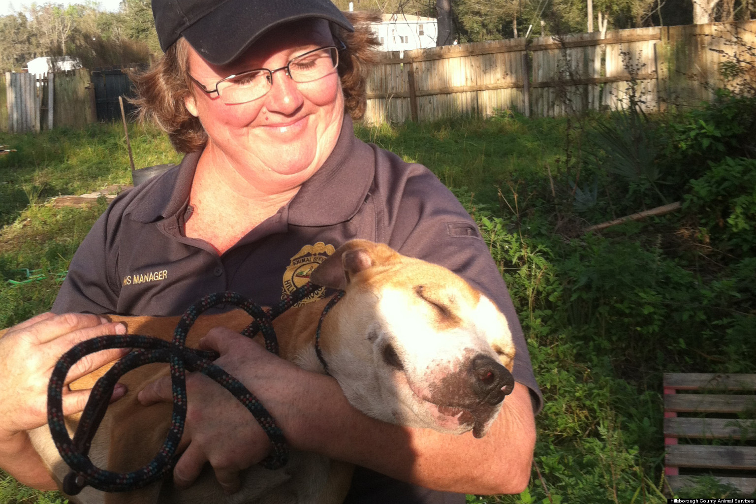 Dogs Saved From Florida Fighting Ring