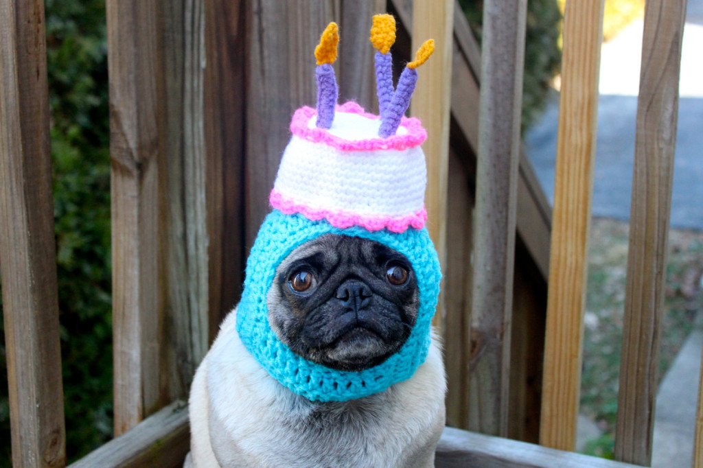 12 Dogs Who Cant Handle Birthdays