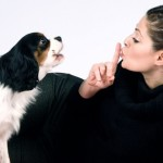 6 ways to stop dog barking in an apartment Why does my dog bark when i leave