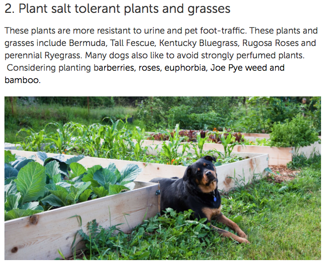 how to make garden dog proof