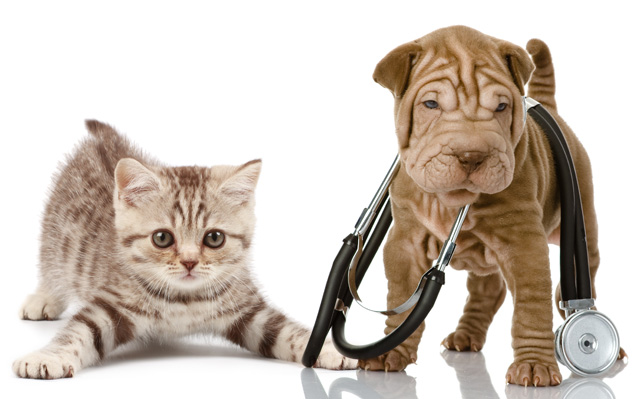 services-puppy-kitten-care-toronto-on