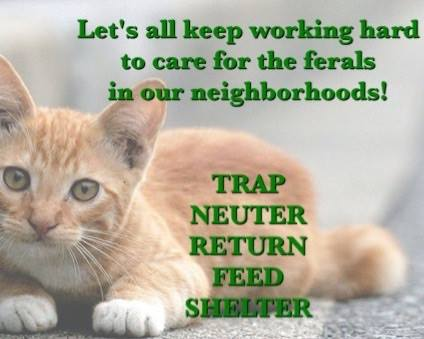trap neuter return poster