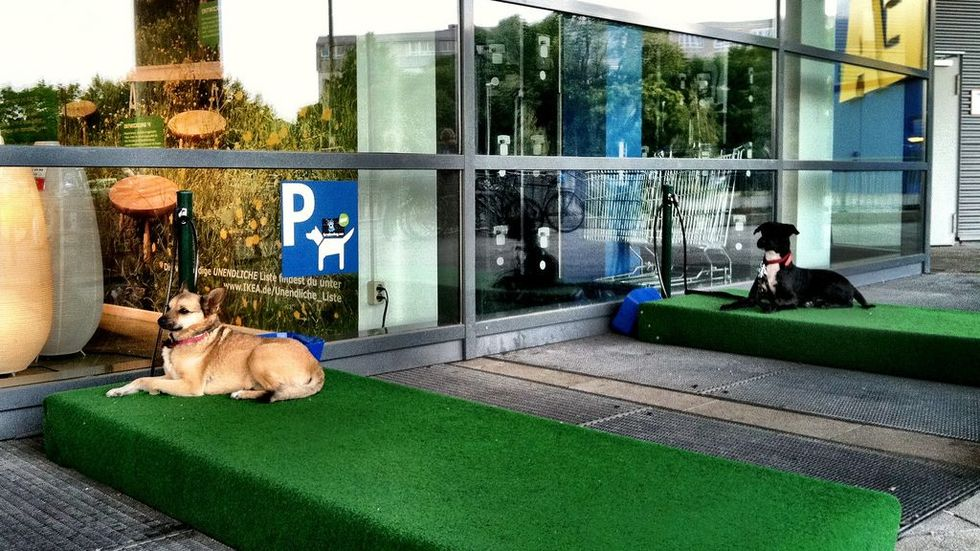 Cologne Germany Ikea Dog Parking Archives 3milliondogs
