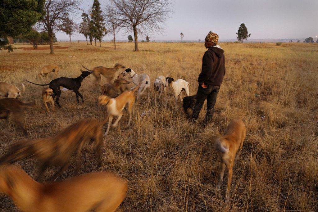 Some People In South Africa Are Still Using Dogs To Hunt