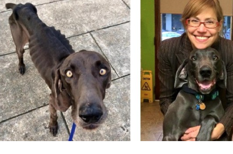 Starving Dog Who Survived On Rocks Has An Amazing Transformation