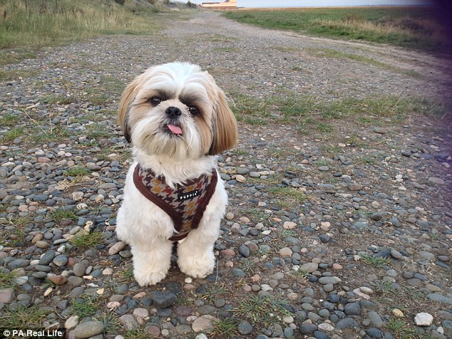 Doggy Genius Shih Tzu Defies Scientists By Learning To Count