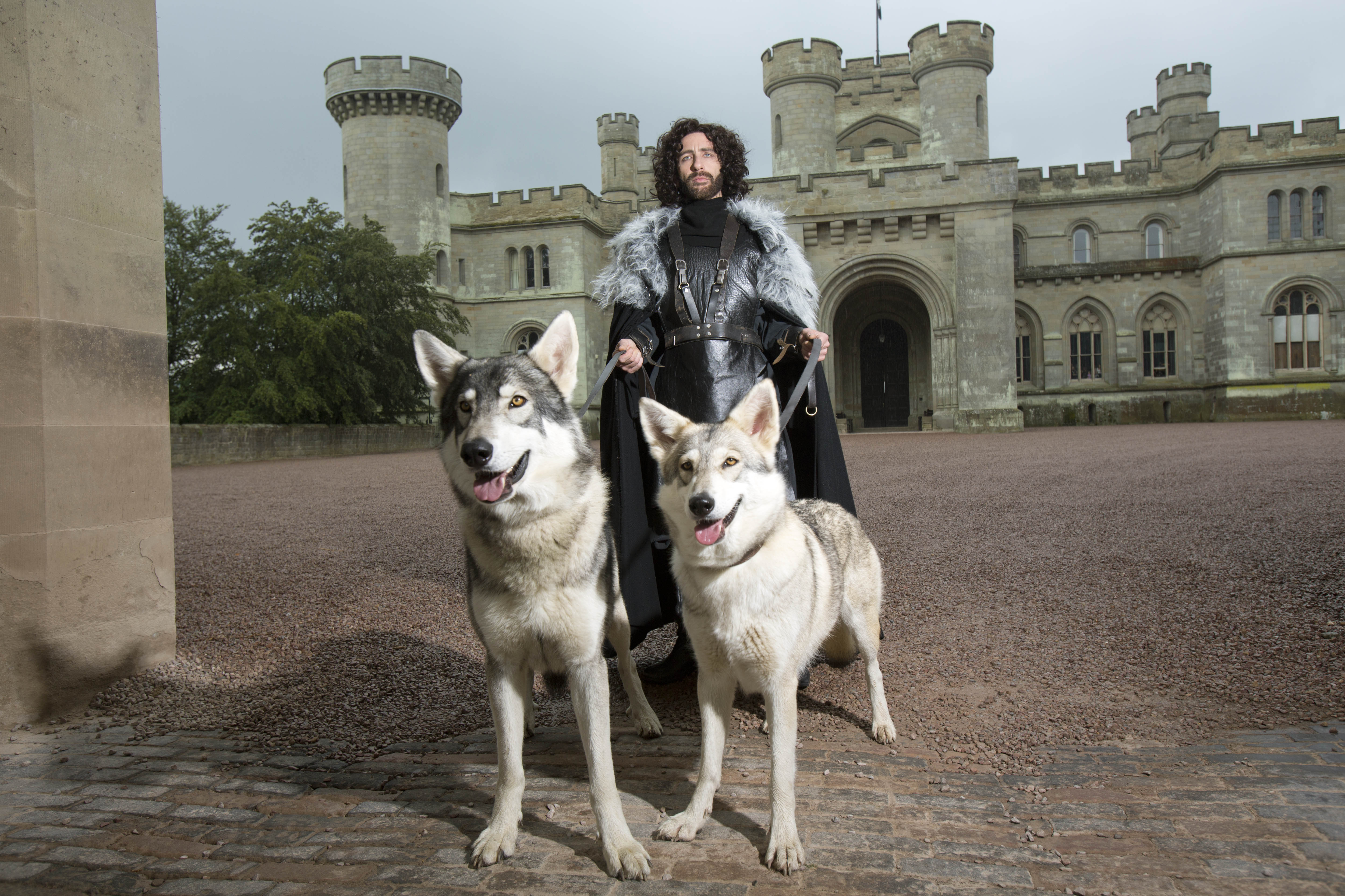 Breed Of Dogs Game Of Thrones