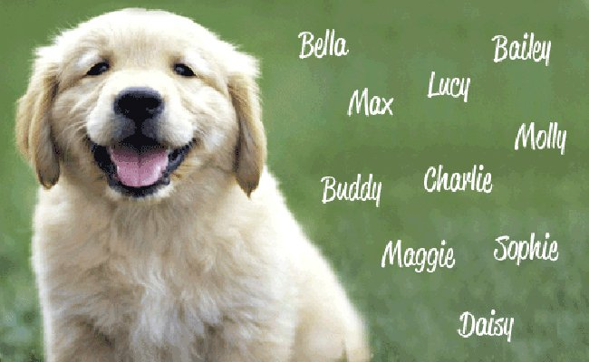 QUIZ What Does Your Dogs Name Say About You