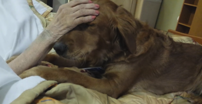 We Talked To The Owner Of The Therapy Dog Whose Touching Video Went Viral