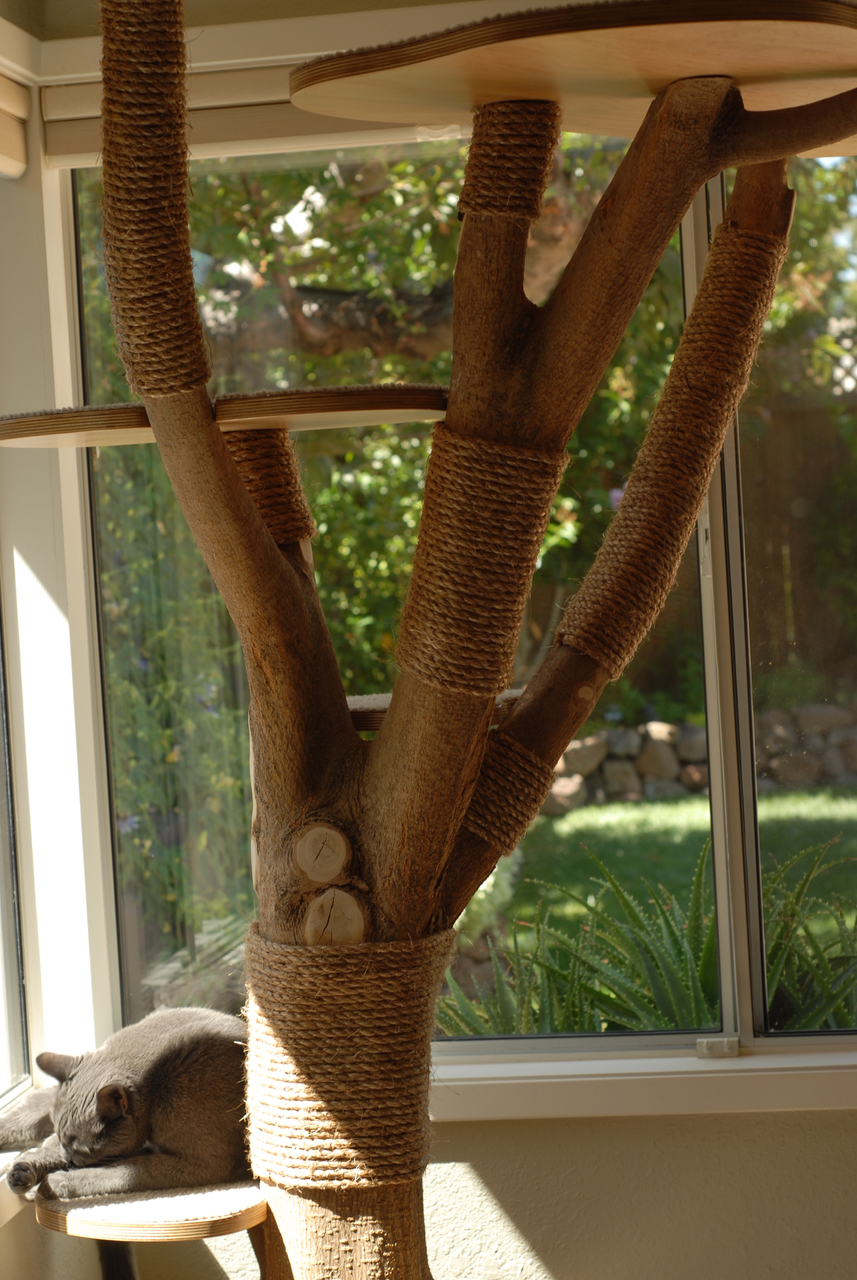 You Need To See This Wonderful Cat Tree Made From Actual Wood