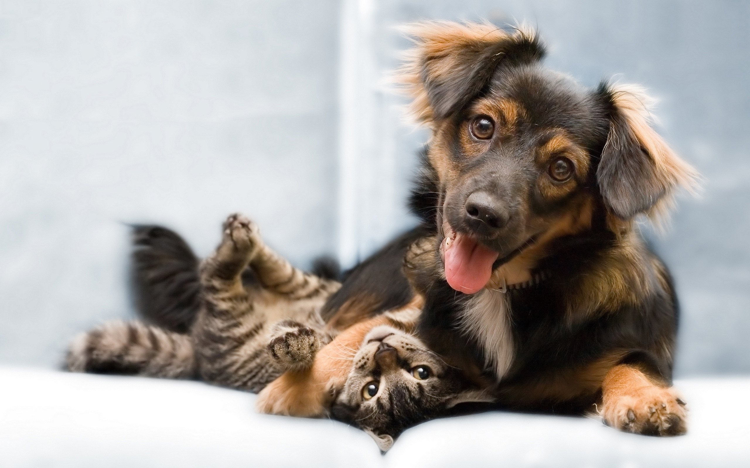 6986681-dog-cat-friends