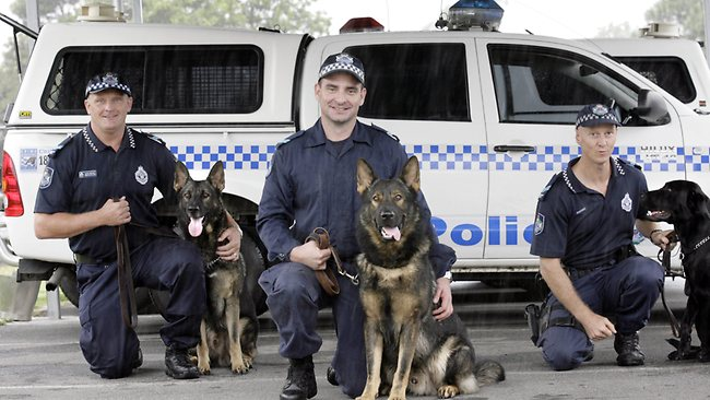 952905-police-dogs