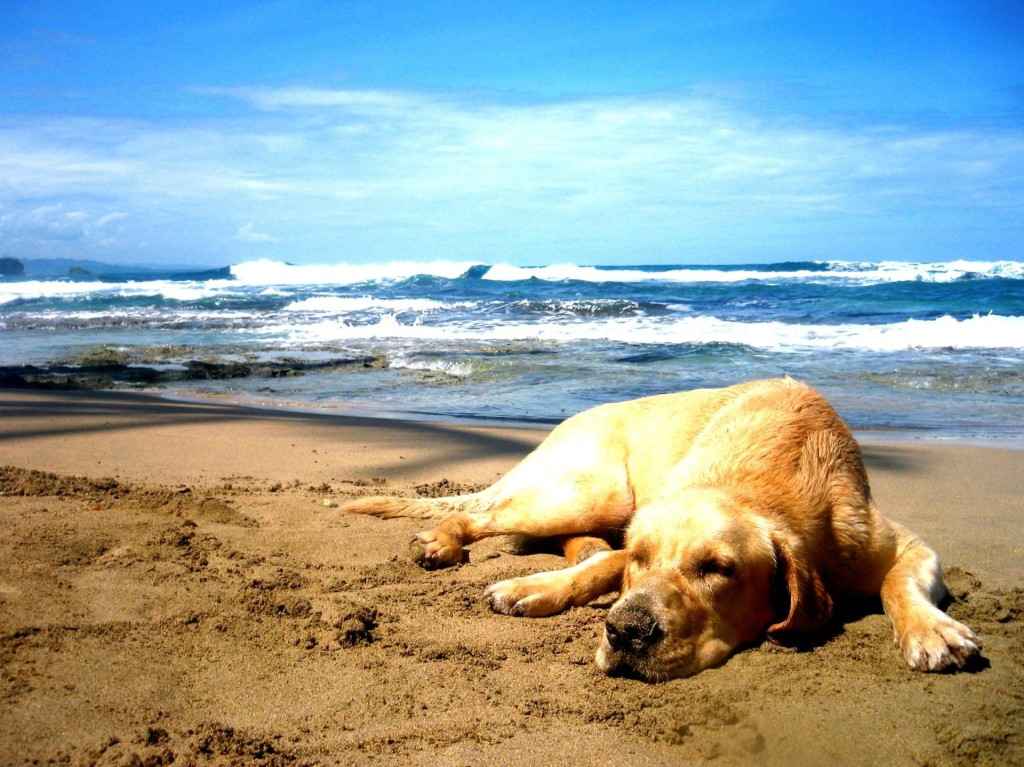 How Long Can You Keep A Stray Dog