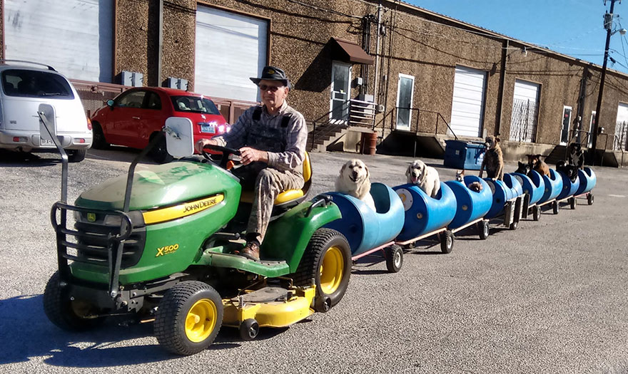Tractor Pulling Train : This super cool old guy pulls around eight stray dogs with