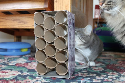 7 Simple Cat Toys That You Can Make With Empty Toilet
