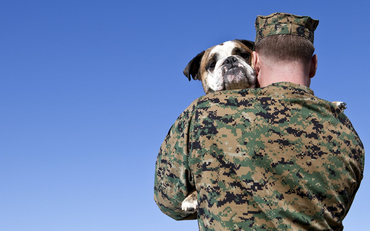 Dogs Get A Second Chance Thanks To Veterans And The Pets Vets Program
