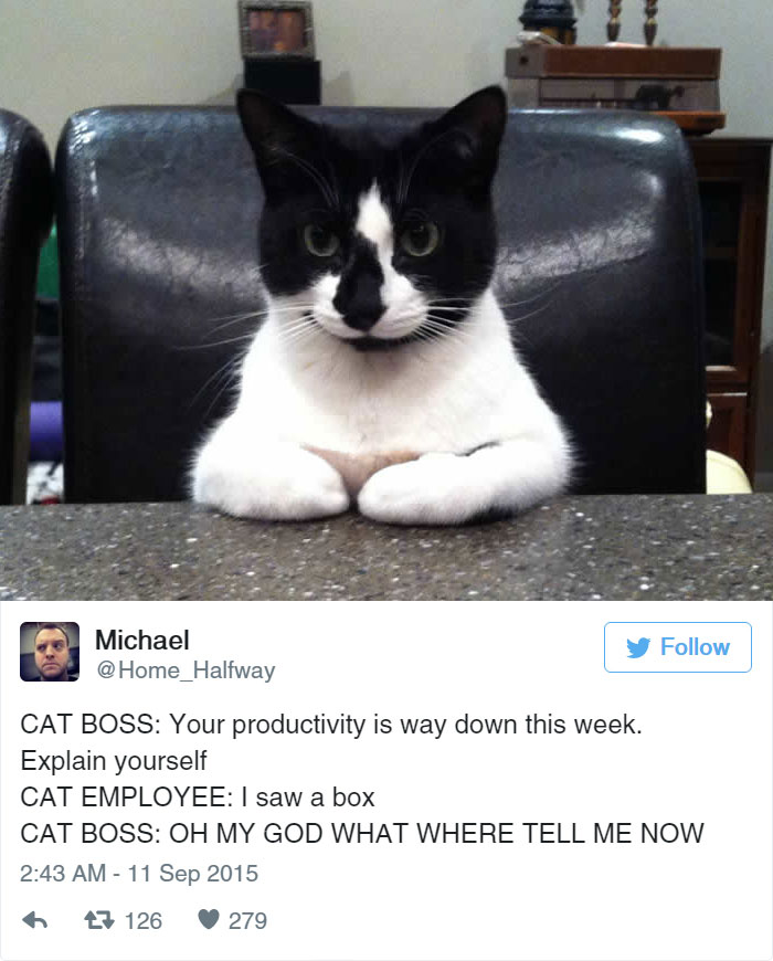 Cat Tweets Prove That Theres Never A Dull Moment When You Have A - The 27 funniest tweets about cats in 2016
