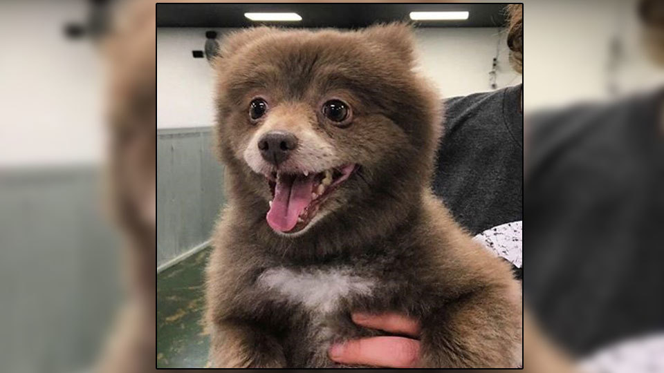 is-this-a-bear-or-a-dog