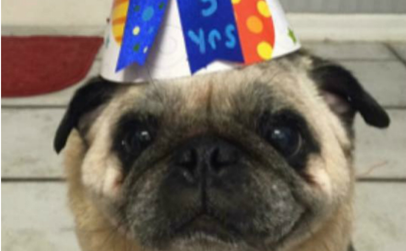 scrappie-bday-use-808x500