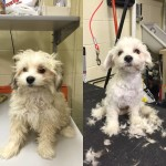 Meet The Man Who Gives Shelter Dogs Free Haircuts To Make