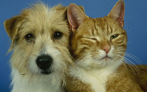pet cat and dog