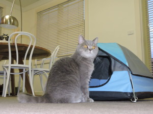 Tiny-tents-for-cats14__880
