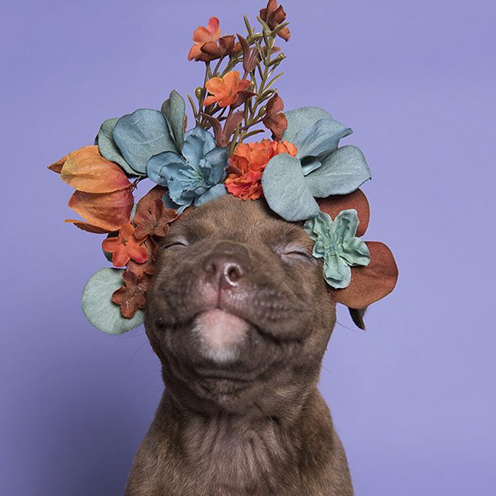 Photographer Uses Flower Power To Find These Pit-bulls