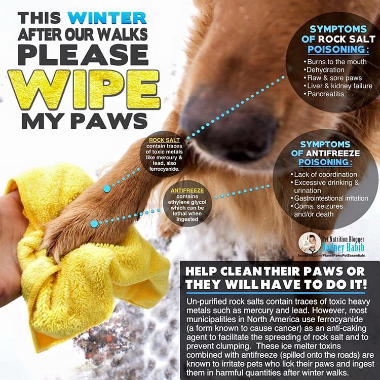 Another winter hazard for your dog you should know about!