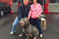 Bull Mastiff gets forever home