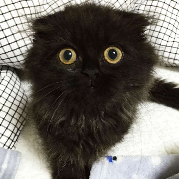 cute fluffy black cat Archives | 3 Million Dogs